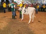 IX Festa Estadual da Suinocultura em Seara