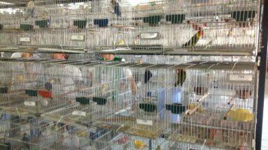 Torneio de pássaros SOCO Chapecó