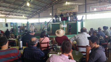 Feira de reprodutores da raça Charoles e gado geral em Abelardo Luz
