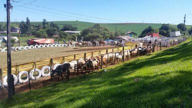 Rodeio gaúcho em Ipuaçu