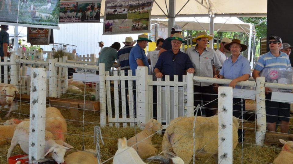 Colatto destaca a ovinocultura no Itaipu Rural Show