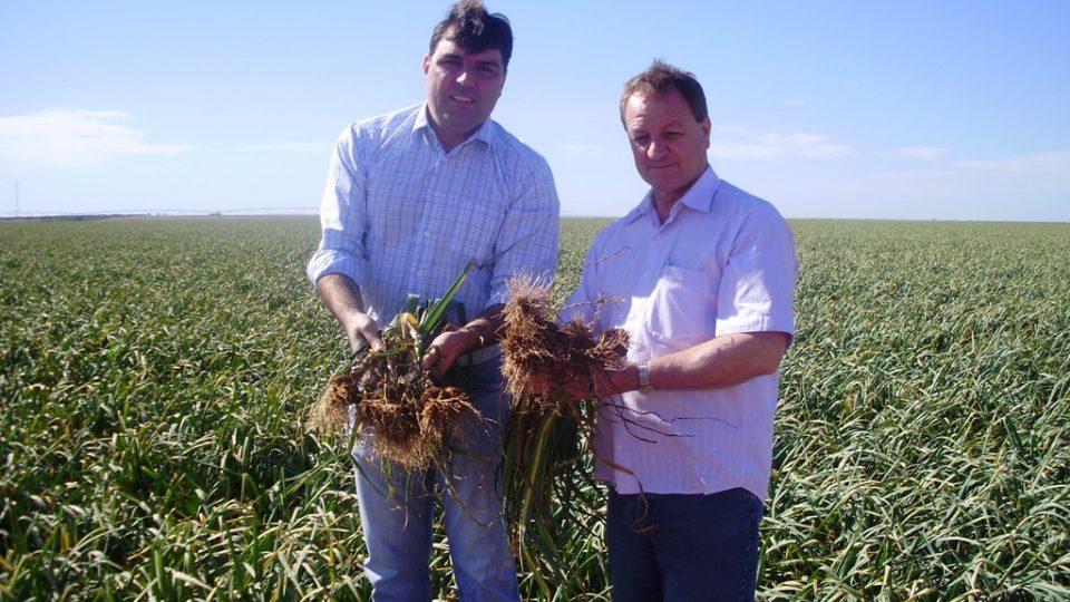 Medida beneficia produtores de alho em todo país