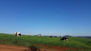 Visita a propriedade rural de Eduir Ceron e família em Ipuaçú