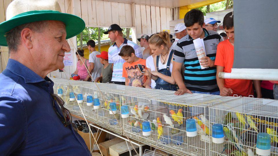 Em plenário, Colatto defende regulamentação da criação de passeriformes
