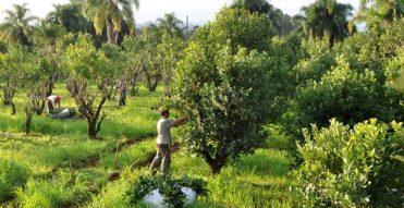 Comissão aprova Projeto de Lei sobre política nacional da erva-mate