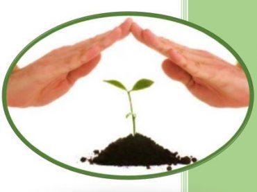 Ministério da Agricultura receberá novas propostas para adesão ao seguro rural