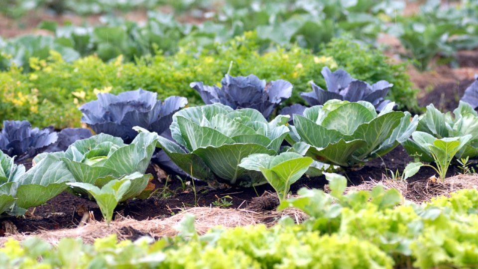 Mais de R$ 2 milhões destinados para a agricultura através de Colatto